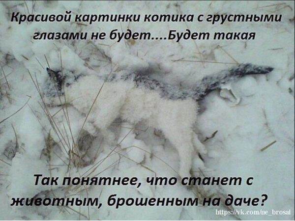 Красивой картинки котика с грустными глазами не будет
